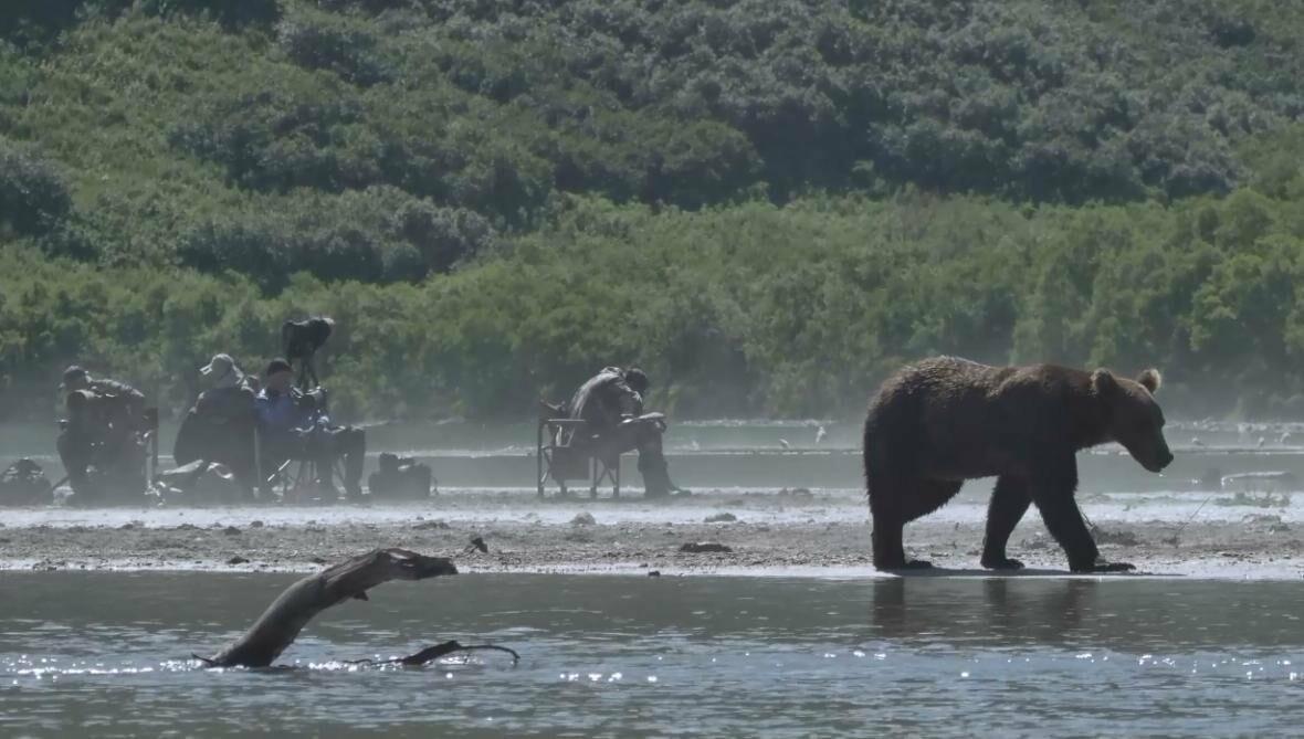 На Камчатке людей и медведей научат дружить, фото-11
