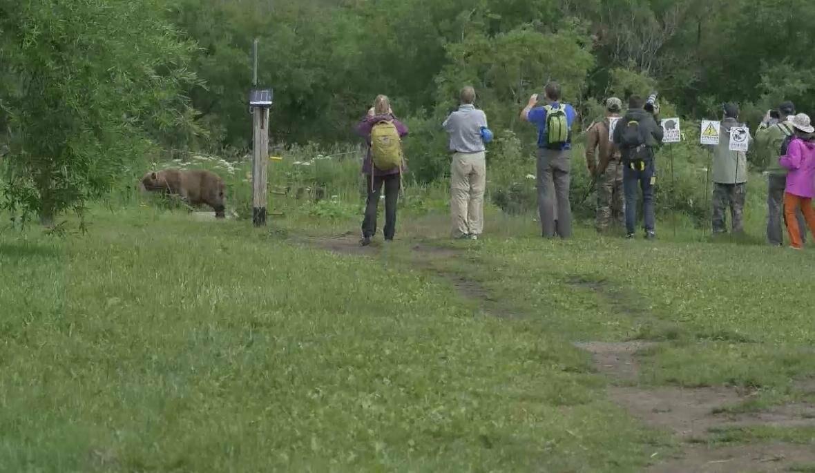 На Камчатке людей и медведей научат дружить, фото-12