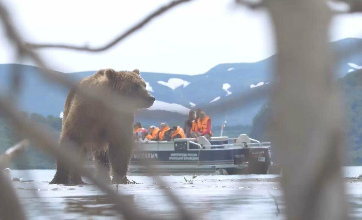 На Камчатке людей и медведей научат дружить, фото-3