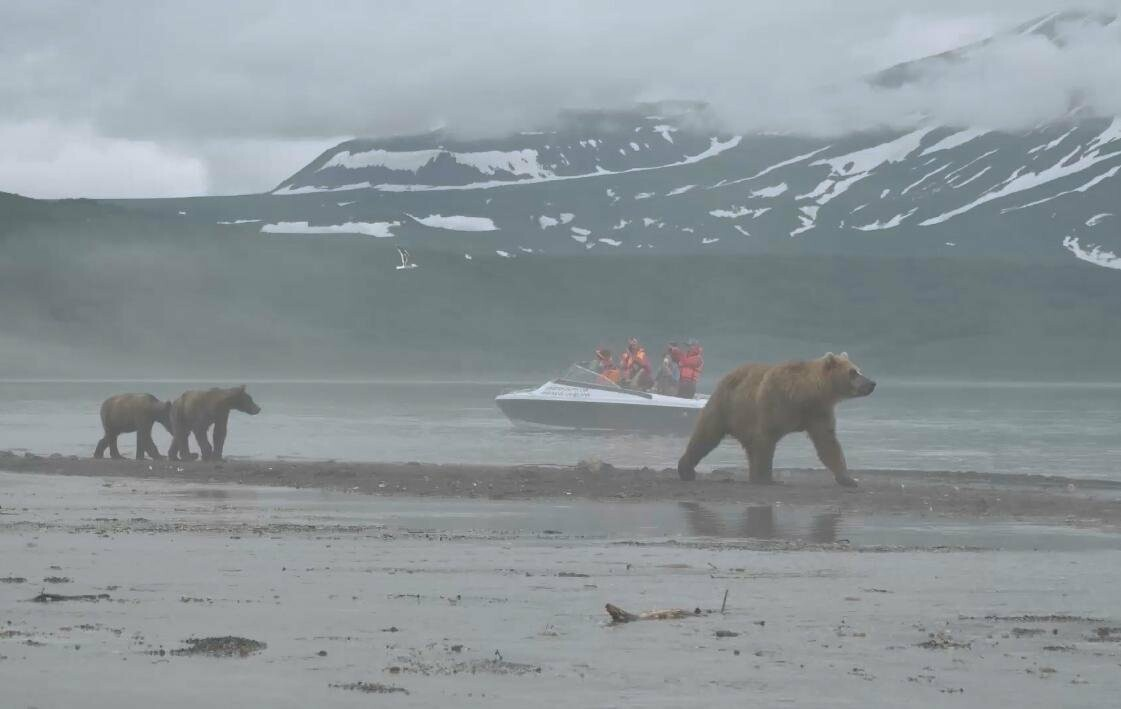 На Камчатке людей и медведей научат дружить, фото-6