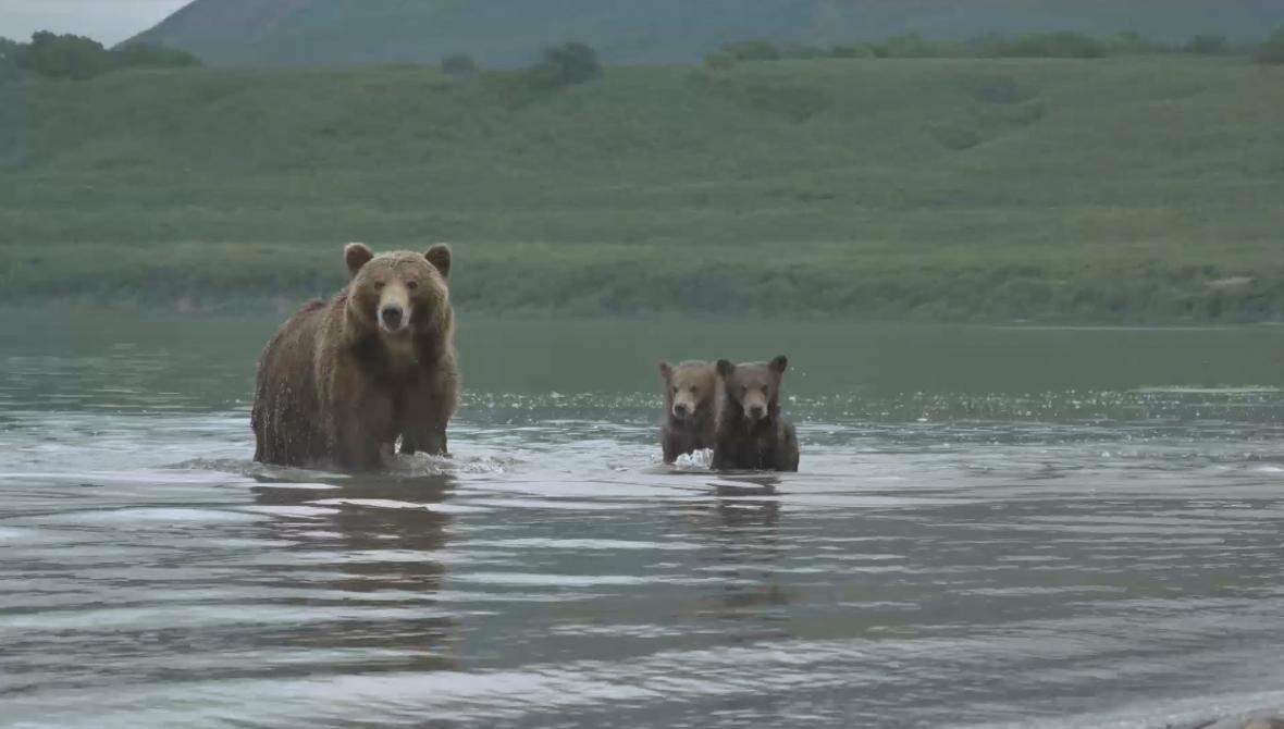 На Камчатке людей и медведей научат дружить, фото-7