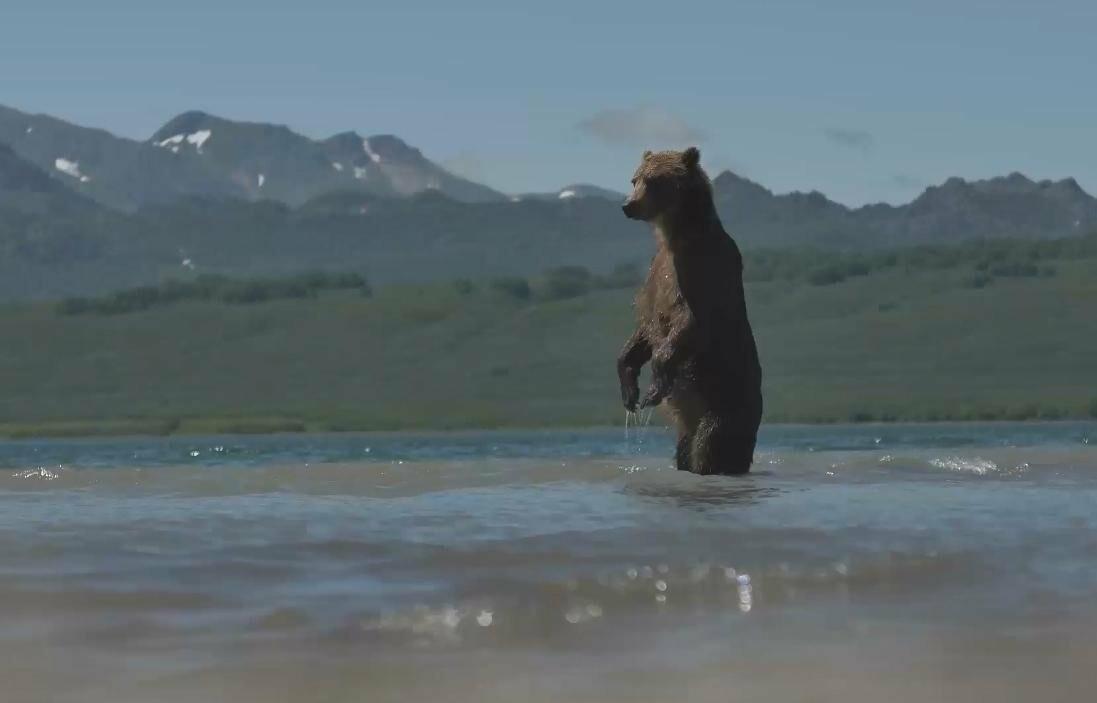 На Камчатке людей и медведей научат дружить, фото-2