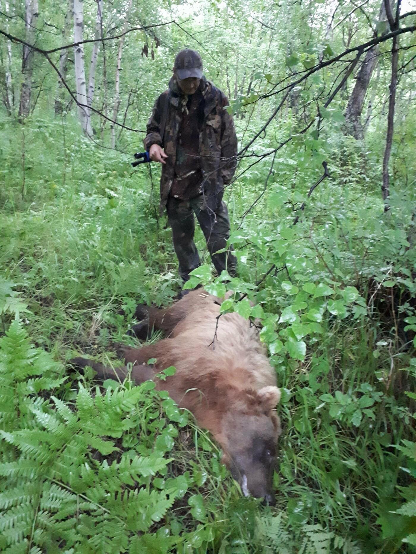Медведя-подранка ищут в районе елизовского кладбища  , фото-2