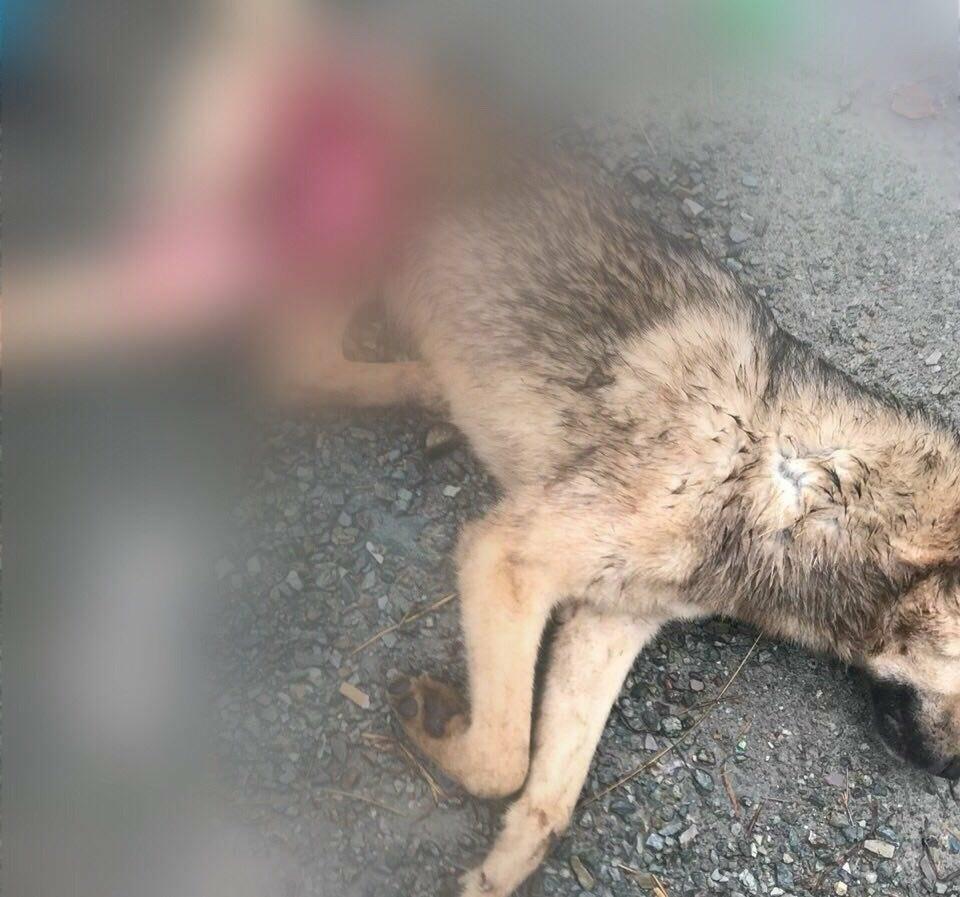 Не для слабонервных - в сети появились жуткие видео из камчатского ПВС для собак, фото-1
