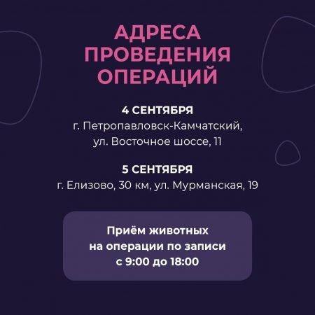 В Петропавловске пройдет бесплатная стерилизация домашних животных, фото-1